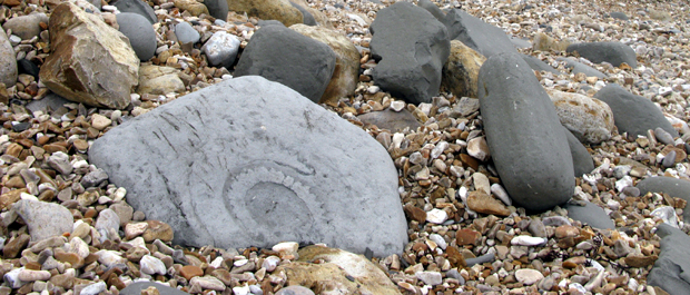 Giant ammonite on beach