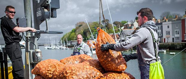 Landing Whelks in Weymouth